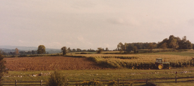 1980s Fields